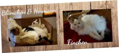 Blümchen, Hermann und Finchen